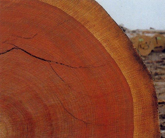 Махагони - красное дерево