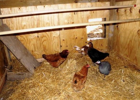 Недорогое утепление построек для животных, птичников, сараев…